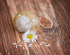 Empty snail shell and a flower
