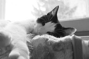 black and white cat sleeps on a battery