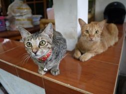 Two small kittens in a house in Bali