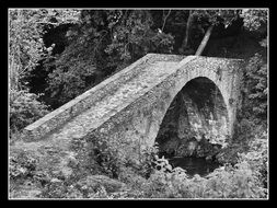 black and white photo of a bridge among nature in a black frame