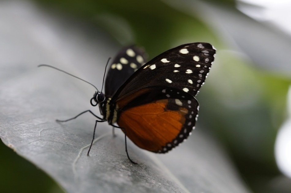 micropicture of monarch butterfly