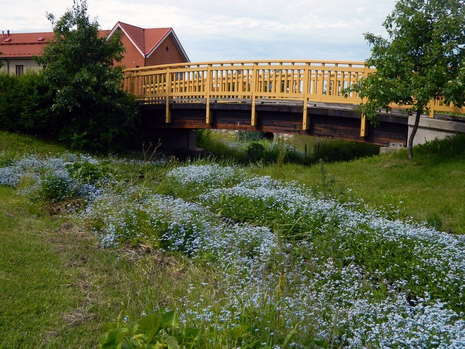 village house and wooden bridge at blooming meadow, finland