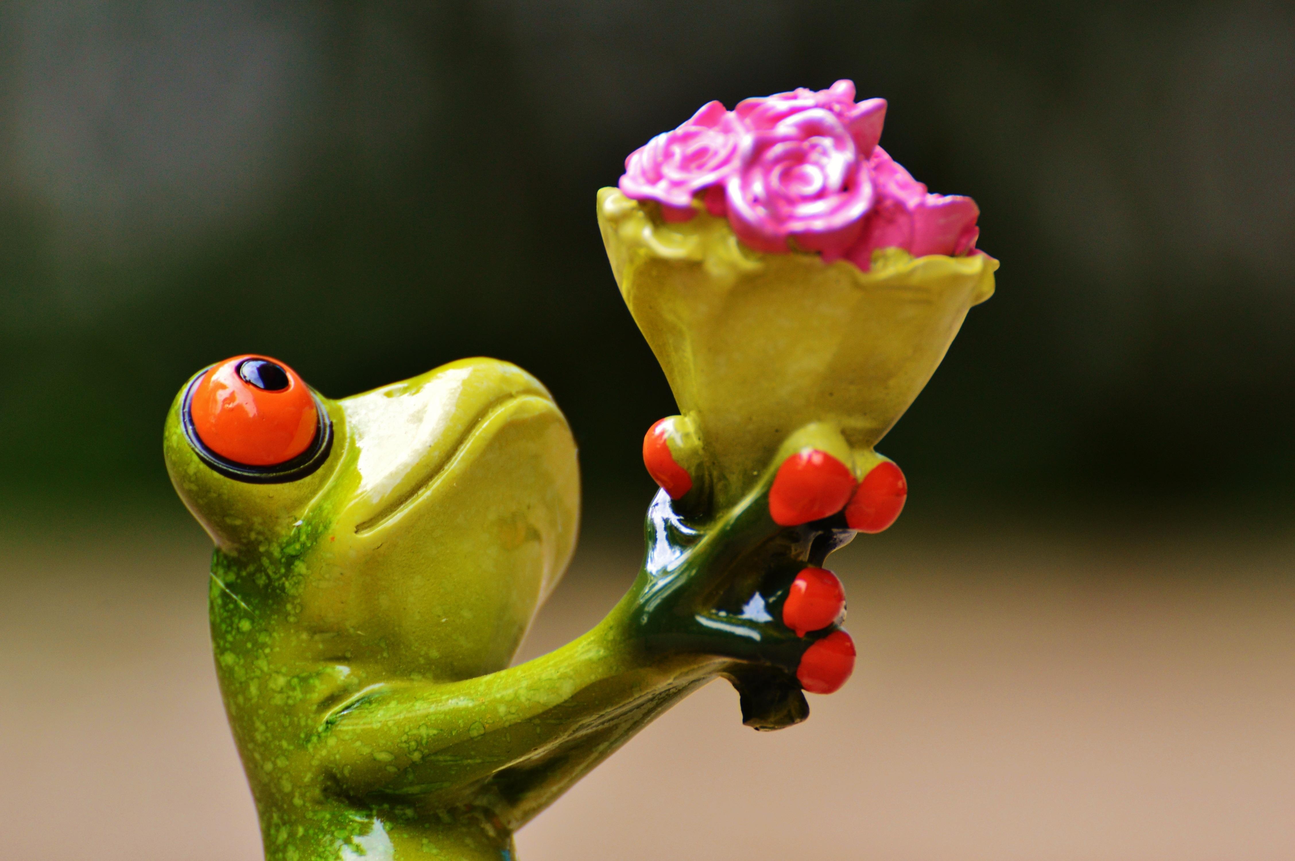 картинки красивые и прикольные про цветы после этого
