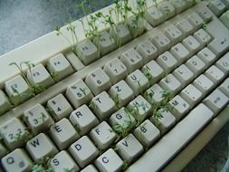 tiny plants in keyboard