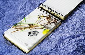 Dried plants on a notepad sheet
