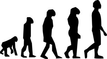 drawing of the evolution of walking darwin