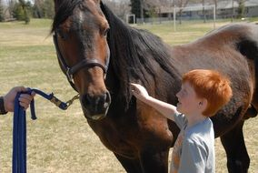 red-haired boy is stroking arab horse