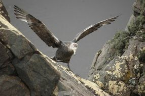 albatross on a rock