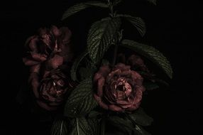 vintage bouquet of dark roses