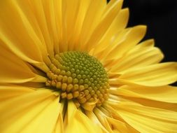 macro shot of a beautiful yellow flower