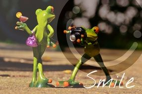 funny frogs on photoshoot