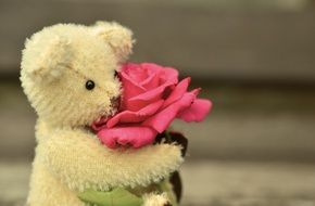 teddy bear holding a rose