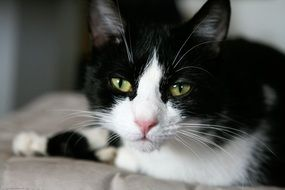 black and white cat with bright eyes