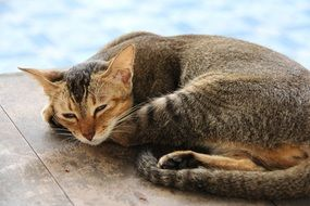 cute brown cat sleepy