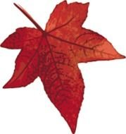 painted red maple leaf on a black background