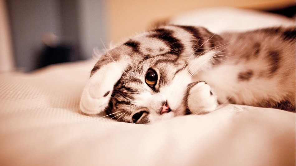 Cute Kitten laying on side with paw on head