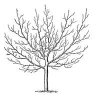 Black and white drawing of the tree in winter clipart