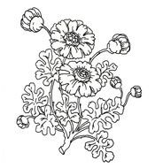 black white flowers as a graphic illustration