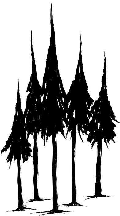 black pine trees as a graphic illustration
