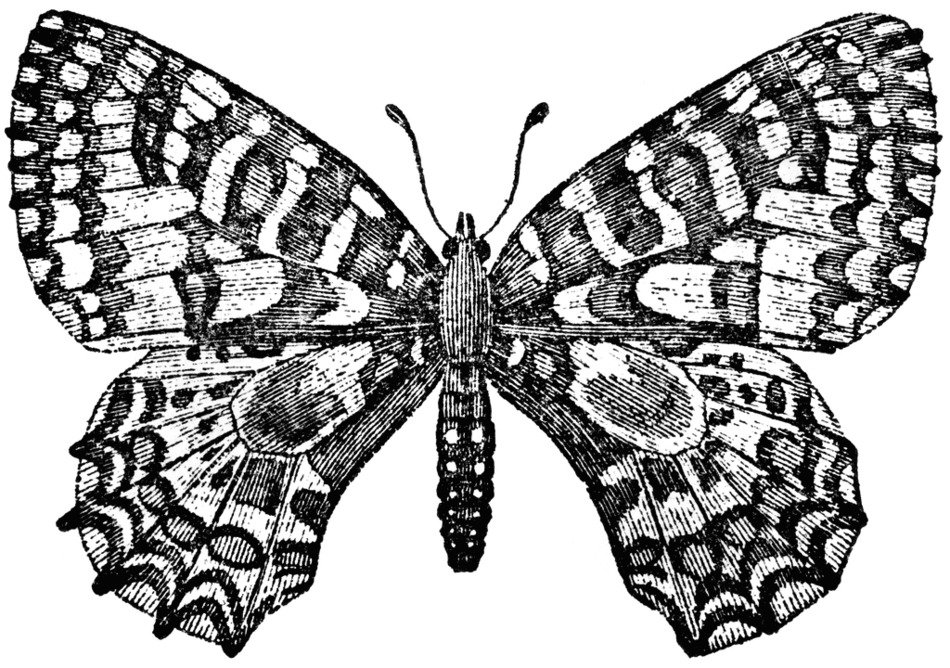 Black and white drawing of the butterfly clipart