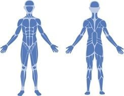 Physical Human Therapy clipart