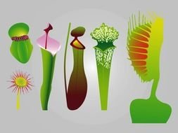 Different Carnivorous Plants clipart