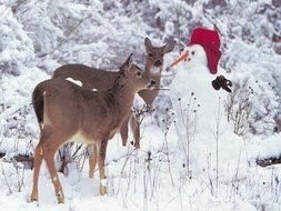 snowman and two deers in the winter forest