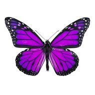 nice Purple Butterfly drawing