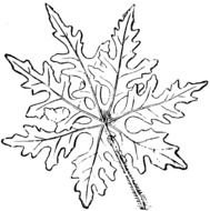 black and white clipart leaves for coloring
