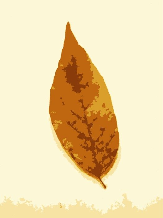 drawing of the fall leaf