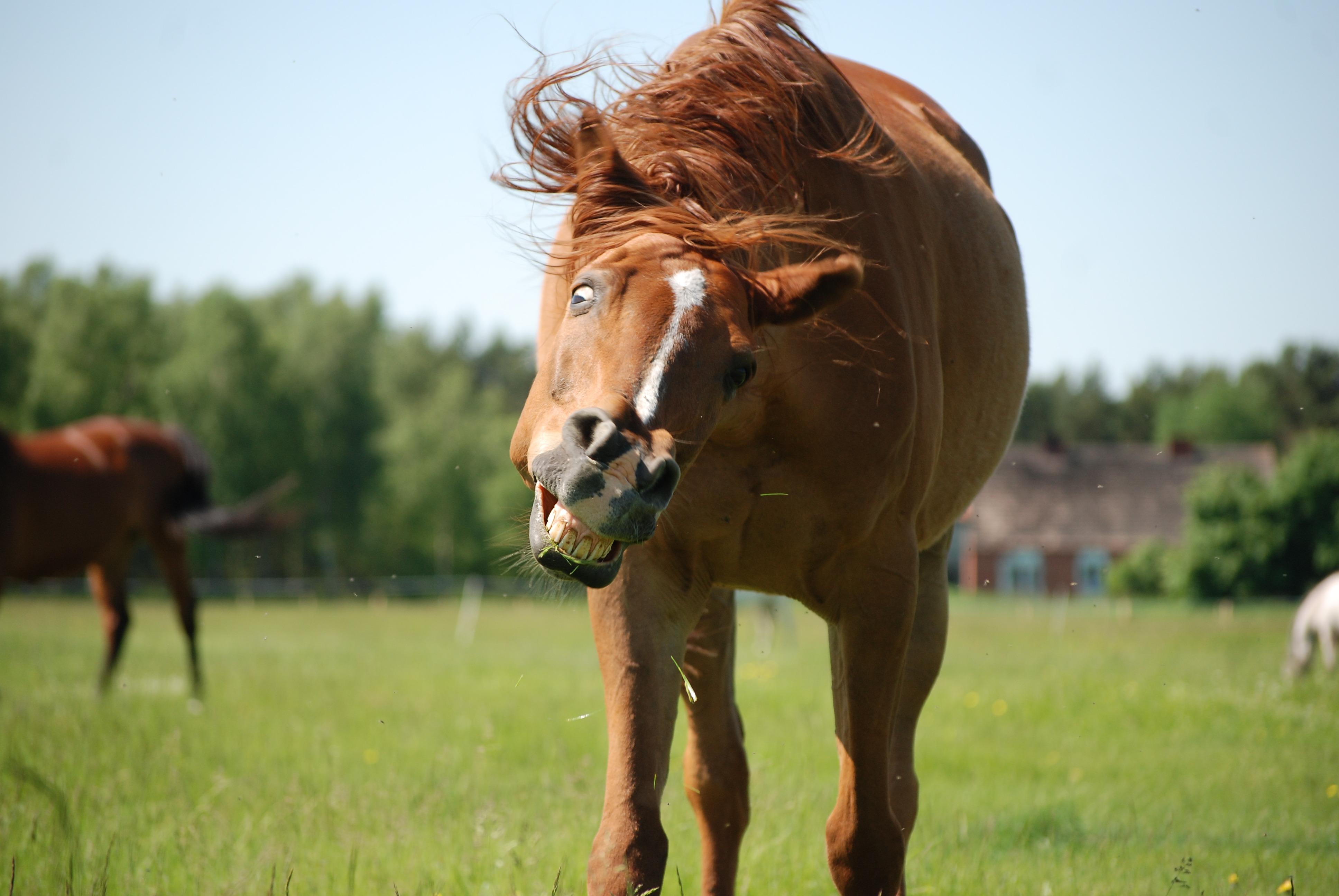 Конь прикольная картинка, днем рождения летнего