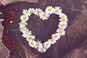 heart shaped daisy wreath