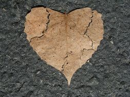 heart broken nature love shape