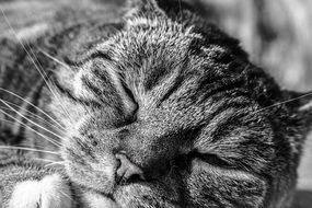 sleep tabby cat