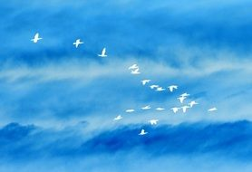 flock of white birds against the blue sky