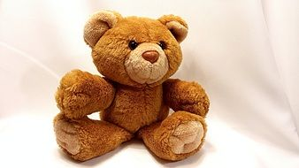 cute brown teddy bear