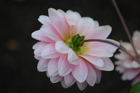 photo of natural delicate flower