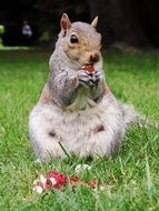cure eating squirrel