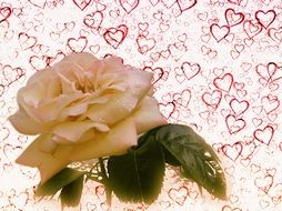 white rose on a background with hearts