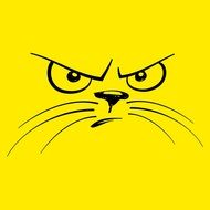 Picture of angry cat