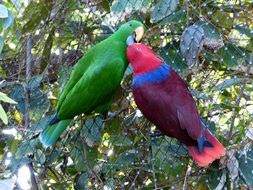 pair of colorful parrots