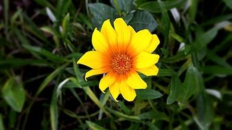 elegant yellow flower