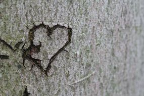 carved heart on the tree bark