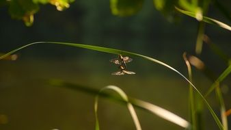 dragonfly on a blade of grass