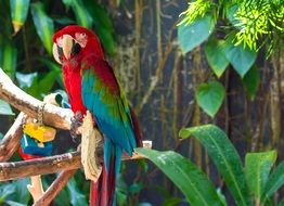 bright macaw parrot on branch