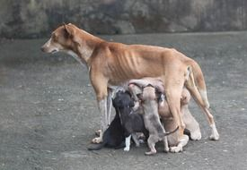 many puppies feed on mother\'s milk