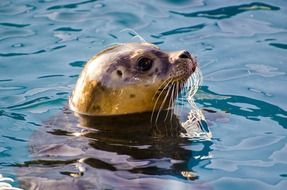 seal in the North Sea