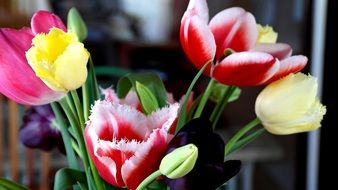 a bouquet of different color tulips