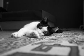 black and white cat lying on the carpet