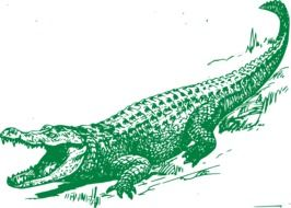 green alligator as a graphic image